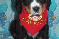 """GALWIN """"Szczęście Ty Moje"""""""
