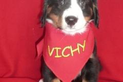 """Vichy """"Szczęście Ty Moje"""""""